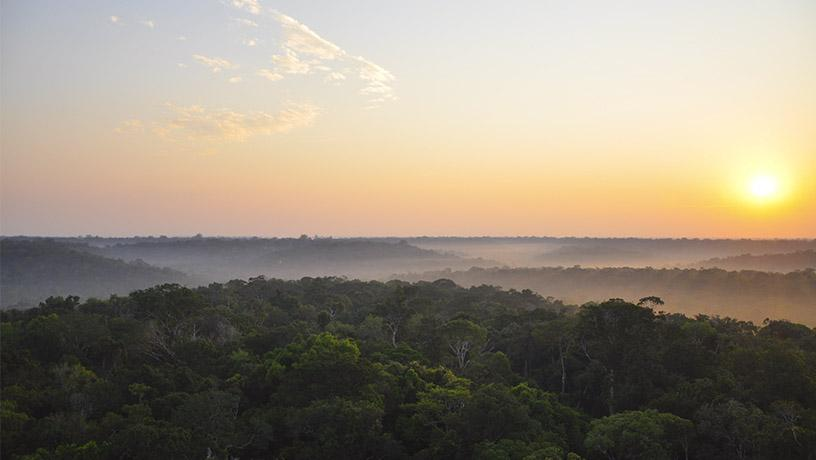 Sunrise over the Amazon rainforest
