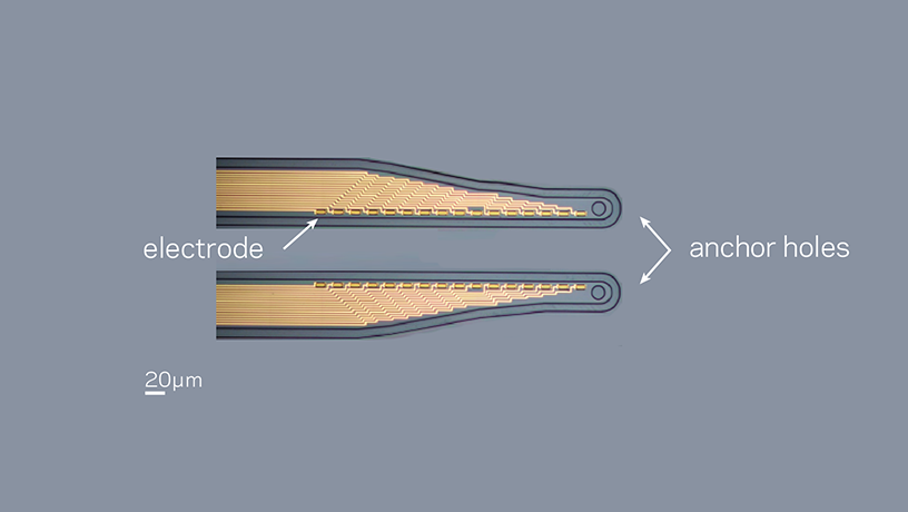 Micrograph of the micro-fabricated conformable conducting polymer-based electrode array.
